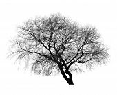Black Leafless Tree Photo Silhouette On White Background