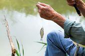 Fisherman Caught Small Bream Fish