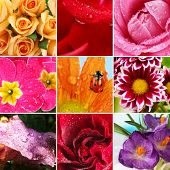 Collage of beautiful flowers with water drops