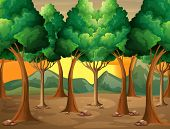 Illustration of the trees at the forest