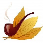 image of tobacco leaf  - Vector Illustration Icon of Vintage pipe in closeup and isolated in white with three tobacco leaves - JPG