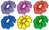 Illustration of the six colourful flowers on a white background