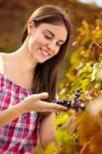 young female winemaker observing grapes in vineyard
