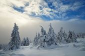 Christmas landscape with snow-covered forest