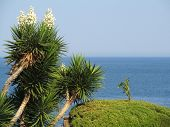 Yucca on sea background