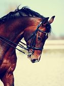 stock photo of stable horse  - Brown stallion - JPG