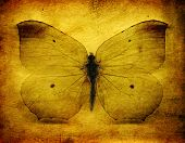 Grunge Butterfly Background
