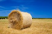 Straw roll bale on the farmland with the clear blue sky at Menorca, Spain.