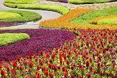 Beautiful Flower Plantation Decorated In Garden