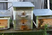 Homemade bee hives with bees around