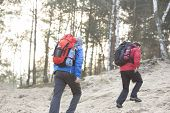 Male backpackers walking in forest