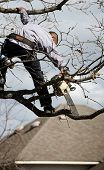 stock photo of tree trim  - Workman with saw on the tree triming the branch - JPG