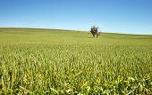 Farm Has Fields Of Wheat