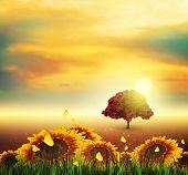 Summer, Field, Tree, Sky, Sun, Sunset, Grass, Sunflowers, Butterflies