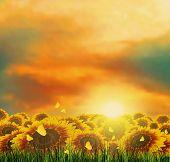 Summer, Field, Sky, Sun, Sunset, Grass, Sunflowers, Butterflies