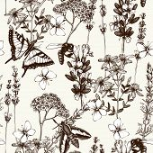herbs flowers pattern