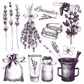 hand drawn lavender illustration