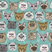 foto of scottish-fold  - Seamless pattern with cats Siamese - JPG