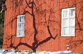 Apple Tree Shadow On Winter Farm House Wall