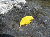 leaf on the stone