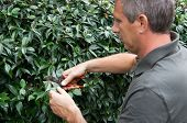 Closeup Of A Mature Male Gardener Pruning Bushes In Garden