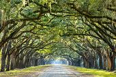 Savannah, Georgia, USA oak tree lined road at historic Wormsloe Plantation.