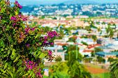 picture of plant species  - San Diego Flowers - JPG