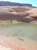 Lake Powell fish