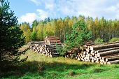 Stack Of Prepared Wood In European Forest