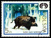 Vintage  Postage Stamp. Wild Boar.
