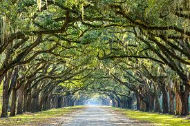 image of dirt road  - Savannah - JPG