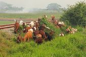 stock photo of eat grass  - Group of Goats eating grass in the railroad track - JPG