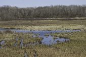 picture of kettles  - Marsh wetland in early spring with standing water - JPG