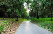 picture of paved road  - A stone paved road through Confucius family cemetery in Qufu Shangdong province China - JPG