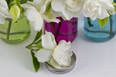 pic of gardenia  - Bouquet of fresh White Gardenias placed in small red green and blue mason jars on white or black background as a decoration for a table - JPG