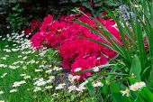 picture of garden eden  - A beautiful corner of a flowery garden in the spring - JPG