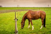 picture of horses eating  - Brown horse on a field eating green grass - JPG
