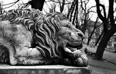 pic of stone sculpture  - Powerfull sculpture of stone lion in Lviv - JPG
