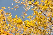 image of october  - Plum tree at Fall - JPG