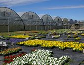 Fall Flowers And Greenhouses