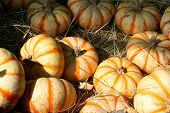 Orange & White Striped Pumpkins