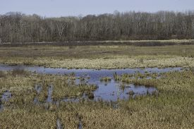 stock photo of marshes  - Marsh wetland in early spring with standing water - JPG
