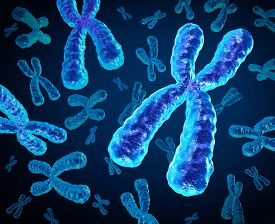 stock photo of genes  - Chromosomes group as a concept for a human biology x structure containing dna genetic information as a medical symbol for gene therapy or microbiology genetics research - JPG