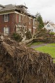 Fallen Tree And House