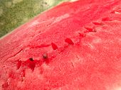 Juicy Watermelon Fresh
