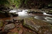 Rain forest With Cascading Water Of The Creek