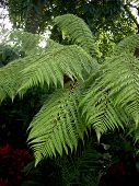 Ferns In The Park 3