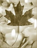 oak leaf with candles