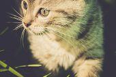 Striped Tabby Kitten Portrait Retro poster
