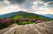 image of appalachian  - Rhododendron Bloom on Blue Ridge Appalachian Trail Roan Mountains Peaks scenic landscape - JPG